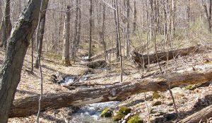vermont hardwood forest
