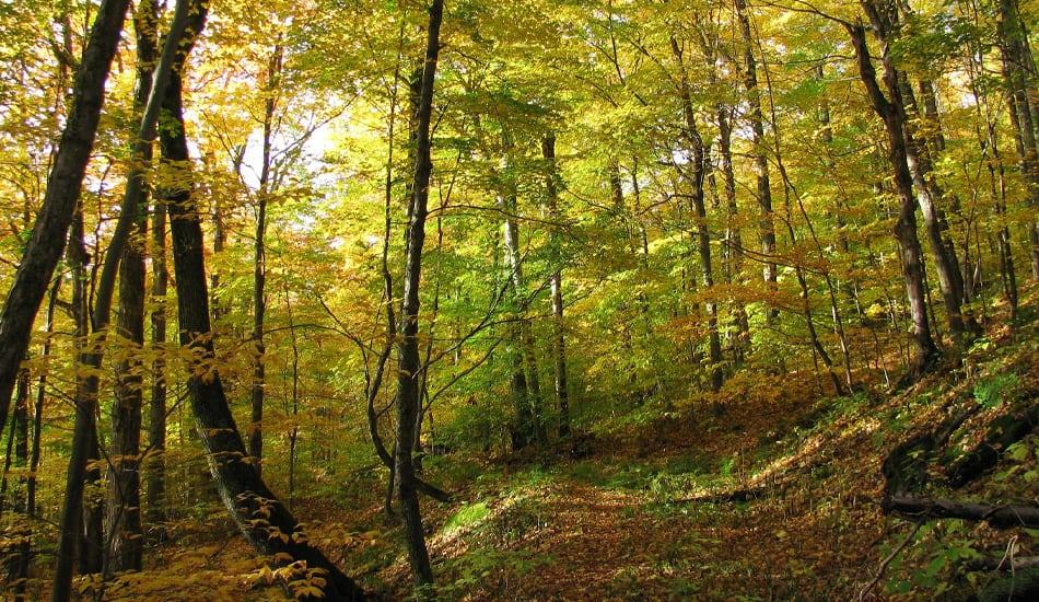 Maidenhair Trail