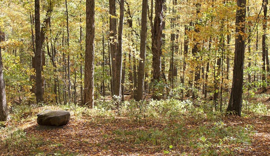 Mountain Bluff Trail