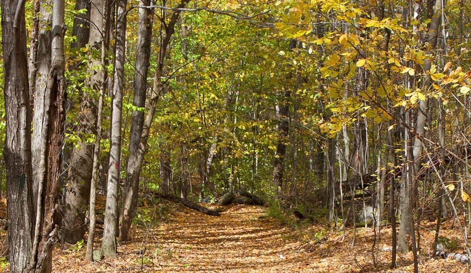 Red Gate Trail